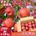 山形県産 りんご 訳あり 早生ふじ 5キロ ご家庭用 産地直送 林檎 リンゴ 5kg