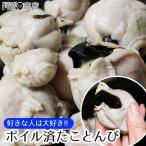 たことんび 1kg前後  タコトンビ  蛸 トンビ 蛸とんび タコとんび たこの口ばし 珍味