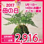 Yahoo!I-CHIEメーカー直送 送料無料 苔玉 母の日 苔 苔園芸 和スタイル 和風モダン 観葉植物 ギフト プレゼント