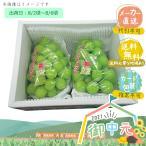 お中元 御中元 メーカー直送 広島県産 シャインマスカット 2房 果物 くだもの フルーツ ギフト お取り寄せ 2021
