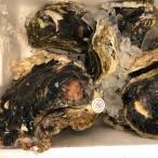 【稀少な大粒サイズ】天然 大粒 岩牡蠣 1粒 静岡・山口県産 かき カキ 岩ガキ