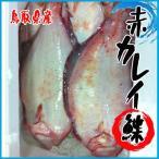 鳥取県産 赤カレイ 約1.5kg以上 (3尾前後入り) かれ