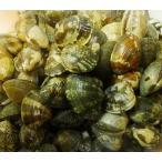 中サイズ 約3−5人前 活アサリ 500g 殻付き あさり