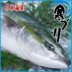 お歳暮)厳選仕入 活〆寒ブリ6-7kg 九州・日本海産 旬 ぶり 鰤