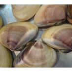 旬の味! 超特大 活地はまぐり 1kg (約4-7個) 千葉県産 ビックリはまぐり はまぐり ハマグリ 蛤★築地