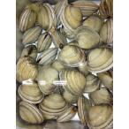 江戸前 活ホンビノス約5kg 千葉産 ほんびのす 貝 活貝 約4-6人前 本美之主貝