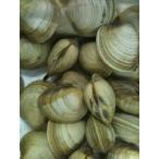 江戸前 活ホンビノス 約1kg (約5-10個) ほんびのす 貝