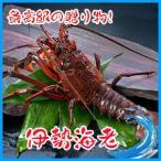 Shrimp - 【高級素材】伊勢海老 1kg (約2-4匹) 伊勢エビ えび