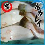 石カレイ 1尾 約260-450g 石ガレイ 鰈