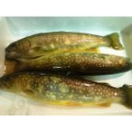 岩魚(イワナ いわな)3尾 約200g 1尾70g イワナ いわな