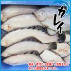 【厳選仕入】カレイ 1kg 約2-5尾