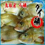 小鯛 2.5kg以上(4-5尾前後入)鯛 タイ たい 鳥取産