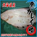 【業務用】北海道産 黒カレイ 約5kg以上(7-12尾前後