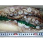 中サイズ 2-3人前 北海生たこ 刺身用 約500g タコ 鮹 蛸