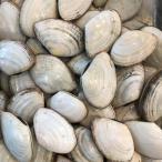 【送料無料】活白貝 約5kg ( 1個約40-60g前後 ) シロガイ 貝