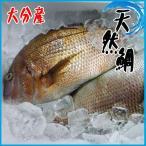 ★縁起物★活〆天然鯛 1尾 約1kg以上 タイ たい 大分産