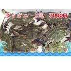 特大 活ワタリガニ 1尾 約450g-500g前後 九州・佐賀産 カニ かに ワタリガニ わたりがに 渡り蟹