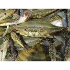 同梱にオススメ 活ワタリガニ 1尾 約250-300g 渡り蟹 カニ 蟹 九州産