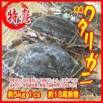 お歳暮) 冷凍ワタリガニ 約5kg   1cs  約18尾前後    渡り蟹 カニ 蟹