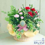母の日ギフト 花キューピットのカーネーションの寄せ鉢