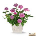 母の日産直ギフト 花キューピットのバラ ブルーオベーション