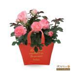 母の日産直ギフト 花キューピットのバラ ホワイトピーチオベーション