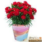 人気の赤カーネーション!柔らかな色彩のグラデーションが美しいオリジナル陶器鉢でお届け。厳選した産地の...