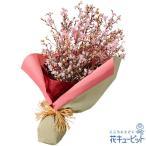 ショッピング春 春のお祝い 花キューピットのさくらの花束