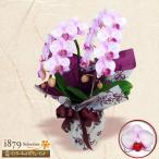 ショッピング花 モテギ洋蘭園胡蝶蘭・お祝い 花キューピットのミディ胡蝶蘭 アヤ2本立(20輪前後)