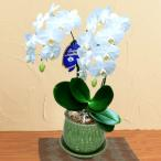 モテギ洋蘭園胡蝶蘭・お供え 花キューピットのお供えミディ胡蝶蘭 アマビリス2本立