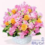 1月の誕生花(スイートピー等) 花キューピットの春のアレンジメント