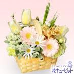 ショッピング春 2月の誕生花(チューリップ等) 花キューピットの春のガーデンバスケット