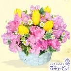 2月の誕生花(チューリップ等) 花キューピットの春のバスケットアレンジメント