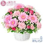 3月の誕生花(ピンクガーベラ等) 誕生日 お祝い 記念日 プレゼント 花キューピットのピンクガーベラのアレンジメント