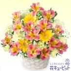 4月の誕生花(アルストロメリア等) 花キューピットのアルストロメリアのアレンジメント