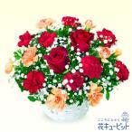 12月の誕生花(赤バラ等)・赤バラのアレンジメント 花キューピット 誕生日 お祝い 記念日 プレゼント