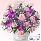 お祝い 花 プレゼント ギフト 花キューピットのデンファレのアレンジメント