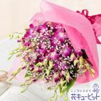 お祝い 花キューピットのピンクデンファレの花束