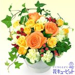 お祝い 花キューピットのオレンジバラのアレンジメント