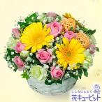 お見舞い 花キューピットのイエローガーベラのアレンジメント