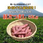 さつまいも 鹿児島 紅さつま 5kg L サツマイモ 5キロ