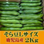 そら豆 空豆 ソラマメ 鹿児島 指宿産 Lサイズ(3〜4粒)2kg サヤ付き 蚕豆