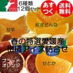 春の特選ジェラート アイス 愛媛産柑橘ジェラート アイス12個 お取り寄せ 送料無料