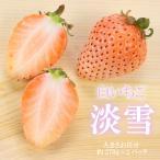淡雪 白いちご 270g×2 大きさおまかせ 贈答用 熊本県産 イチゴ 苺 ギフト 送料無料 「 岡山果物工房 」