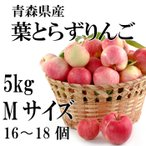 葉とらずりんご 青森県産 JAつがる弘前 サンふじ 太陽ふじ Mサイズ 5kg 16〜18個 光センサー 贈答用