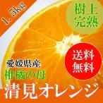 送料無料 清見オレンジ 秀品 1.5kg Lサイズ 贈答用 化粧箱入 お中元 御中元