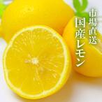 国産レモン 10kg JA全農 など 市場から直送 安心 安全 ノーワックス 防腐剤不使用(減農薬)蜂蜜漬け 塩レモン レモネード「 岡山市場工房 」