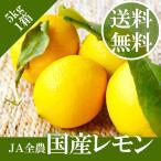 【 国産レモン 】 JA全農 5kg 市場から直送 安心 安全 皮まで使える 送料無料【岡山市場工房】