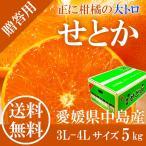 送料無料 2月中旬より発送 せとか 秀品 3L〜4L 5.0kg JAえひめ中央 愛媛県産 光センサー みかんの大トロ ギフト