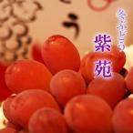 送料無料 岡山県産 紫苑 1房700g 贈答用 ぶどう 葡萄 ブドウ ギフト ペアギフト 天然 スイーツ お歳暮